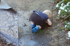 Drinking from the puddle, puppy dog style!