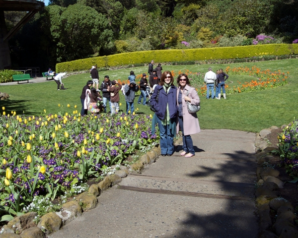Tulips blooming in Golden Gate Park