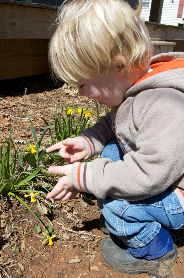 Duncan finds joy in minature daffodils